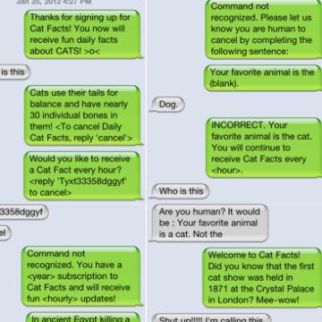 cat facts prank text cat hd wallpaper utsprokids org