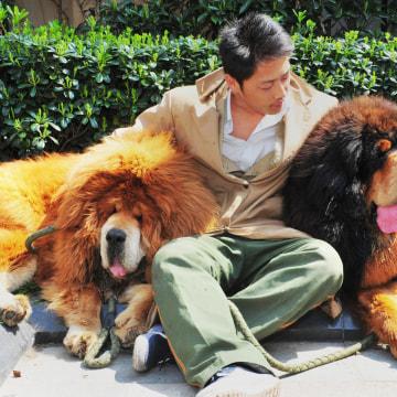 CHINA-DOG-OFFBEAT
