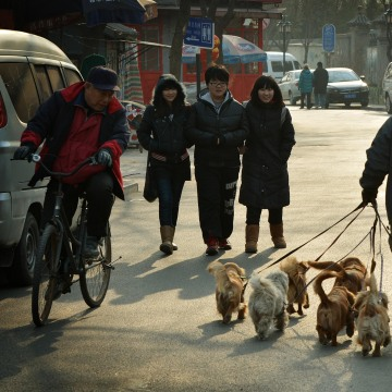CHINA-LIFESTYLE-PETS