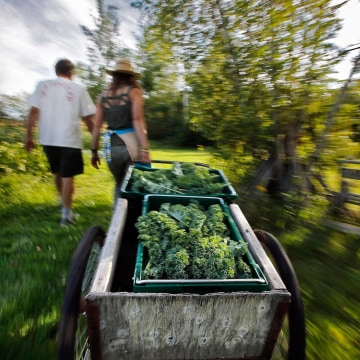 Image: Gleaning produce in Maine
