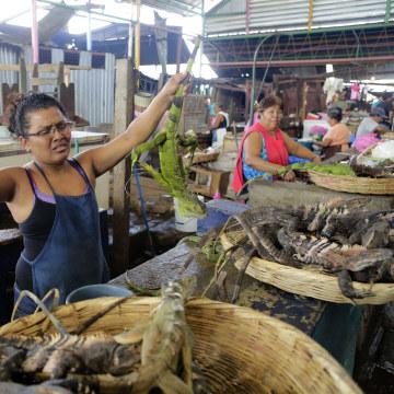 Image: NICARAGUA-DROUGHT-HUNGER-IGUANAS