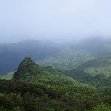 Image: El Yunque National Forest in Rio Grande, Puerto Rico.