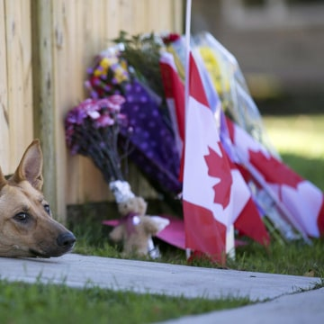 Image: Dogs peek out from under a gate at the Cirillo family home