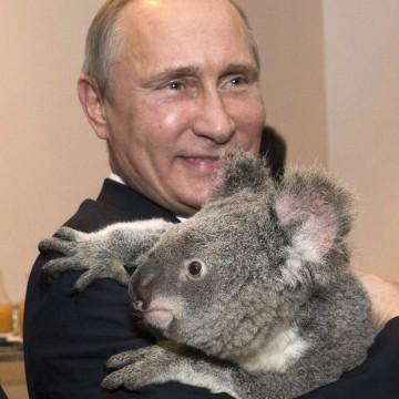 Image: G20 Australia handout photo shows Russia's President Putin holding a koala before the G20 Leaders' Summit in Brisbane