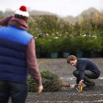 Image: A throw is measured during the UK Christmas Tree Throwing Championships in Keele