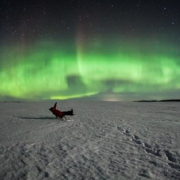 Image: Watching the aurora