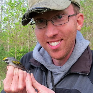 Image: Henry Streby with a male golden-winged warbler and the geolocator that the bird carried