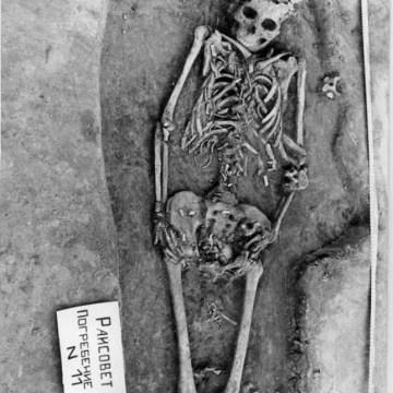 Image: Ancient bones
