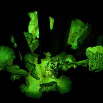 Image: Glowing mushroom