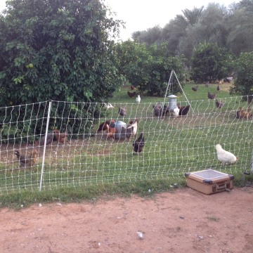 Livestock at Agritopia