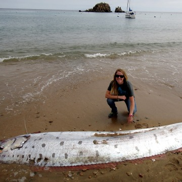 Image: Oarfish that washed up dead on the beach of Catalina Island, California