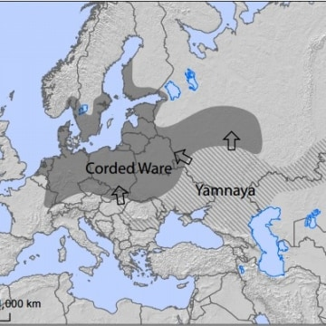 Image: Yamnaya migration