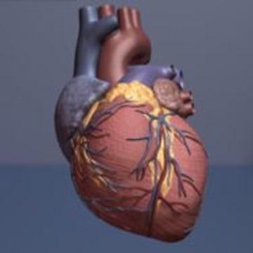 Erectile Dysfunction Meds Add Length To Lives Of Heart ...