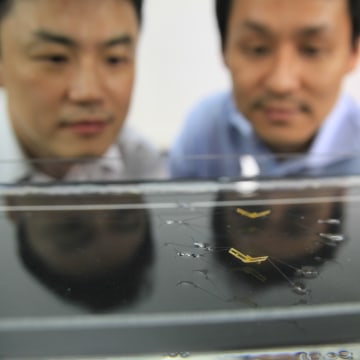 Image: Seoul National University professors Ho-Young Kim and Kyu Jin Cho observe jumping robotic insects