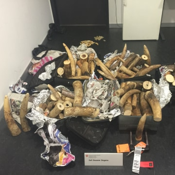 Image: Confiscated ivory