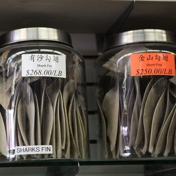 Image: Proposed San Francisco Ban On Sale Of Shark Fins Stirs Protest And Debate