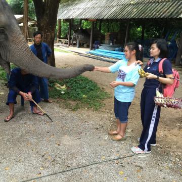 Image: Natthanan Sukon feeding an elephant