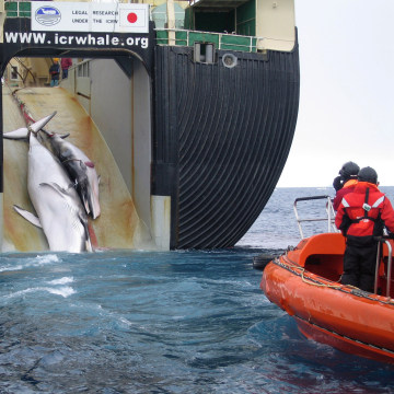 Image: Japanese harpoon ship Yushin Maru 2
