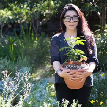 AACE Co-Founder Opehlia Chong carrying a marijuana plant.
