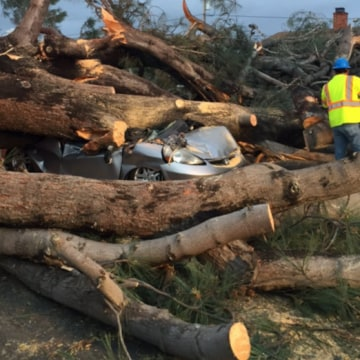 IMAGE: Tree crushes car in San Diego