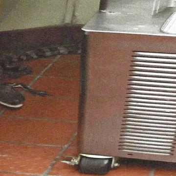 Image: Alligator