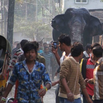 Image: Indian elephant ran amok