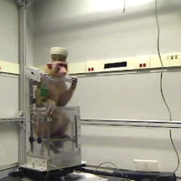 Image: Neuroscientists have developed a brain-machine interface (BMI) that allows primates to use only their thoughts to navigate a robotic wheelchair