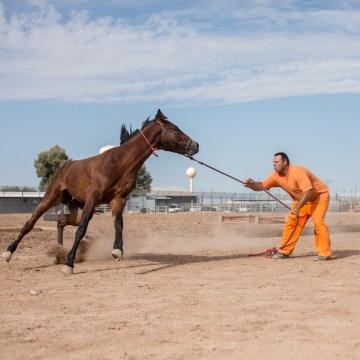 Image: Border Patrol Horse