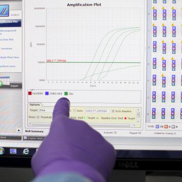Image: A scientist points at a screen with a program that measures samples processed at the Laboratory of Entomology and Ecology of the Dengue Branch of the U.S. Centers for Disease Control and Prevention in San Juan