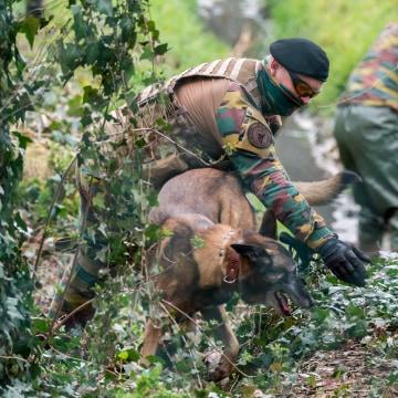 Image: Search underway in Belgium