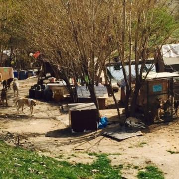 Image: A makeshift dog shelter Ghasem Fathalipour