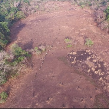 NBC News team treks in the Bili-Uele Forest