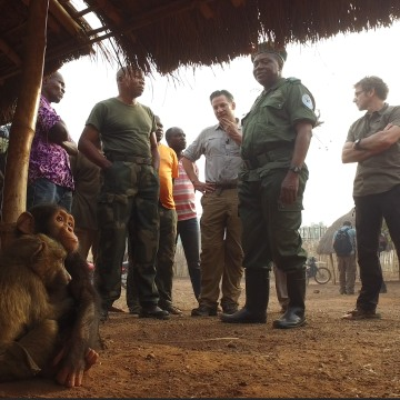 Cobra the chimp