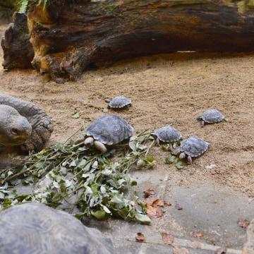 Image: Jumbo alongside some of his offspring