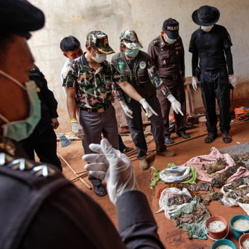Image: Wildlife Officials Raid Controversial Tiger Temple In Thailand