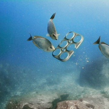 Image: A rendering of environmentally friendly beer rings made of biodegradable, edible packaging