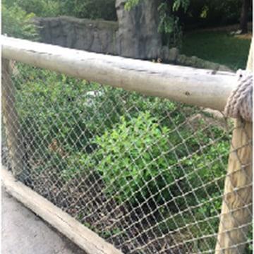 Image: Cincinnati Zoo Plans to Reopen  Gorilla World Next Week