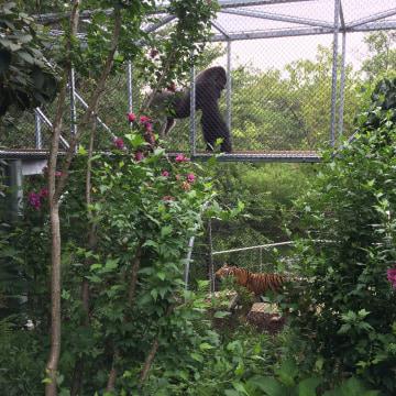 Philadelphia Zoo has installed aerial trails