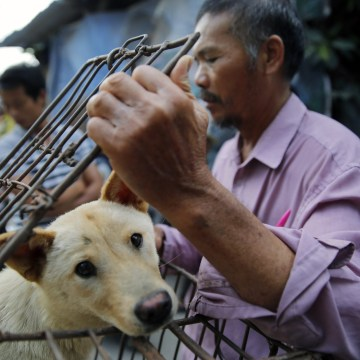 Image: Dog meat sales ahead of Yulin dog meat festival