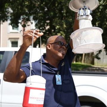 Image: Maximea Vigilant a surveillance entomologist
