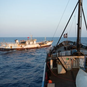 Image: The Sea Shepherd Conservation Society has had many clashes at sea with Japanese scientists.