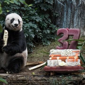 Image: Giant panda Jia Jia