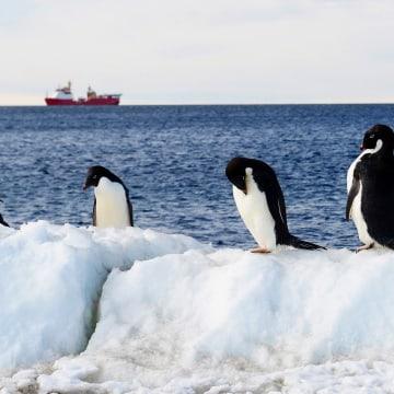 Image: Penguins in Terra Nova Bay, Victoria Land, Antarctica