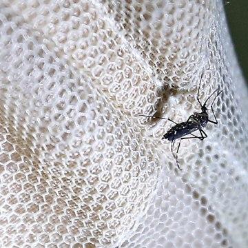 Image: First case of Zika in Myanmar