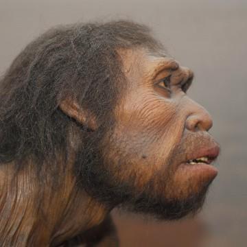 Human Origins: New permanent Exhibit at the Museum of Natural History in New York, Human origins