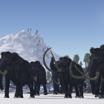 A herd of Woolly Mammoths migrate to a warmer climate in the Pleistocene Age.