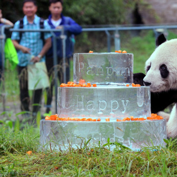 Image: CHINA-ANIMAL-PANDA