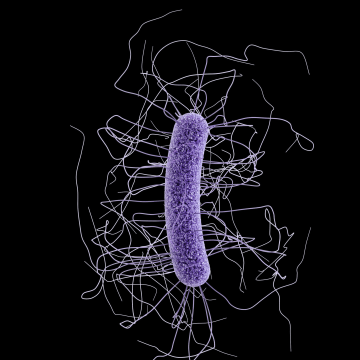 Image: Clostridium difficile