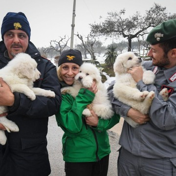 Image: Puppies rescued alive fromavalanche-hit Rigopiano Hotel in Abruzzo, Italy