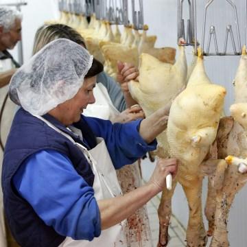 Image: A foie gras producer prepares ducks in her laboratory in La Bastide Clairence